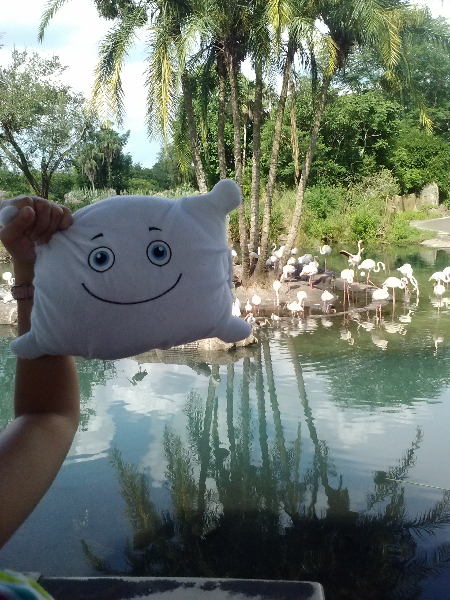 McStuffy and flamingo island