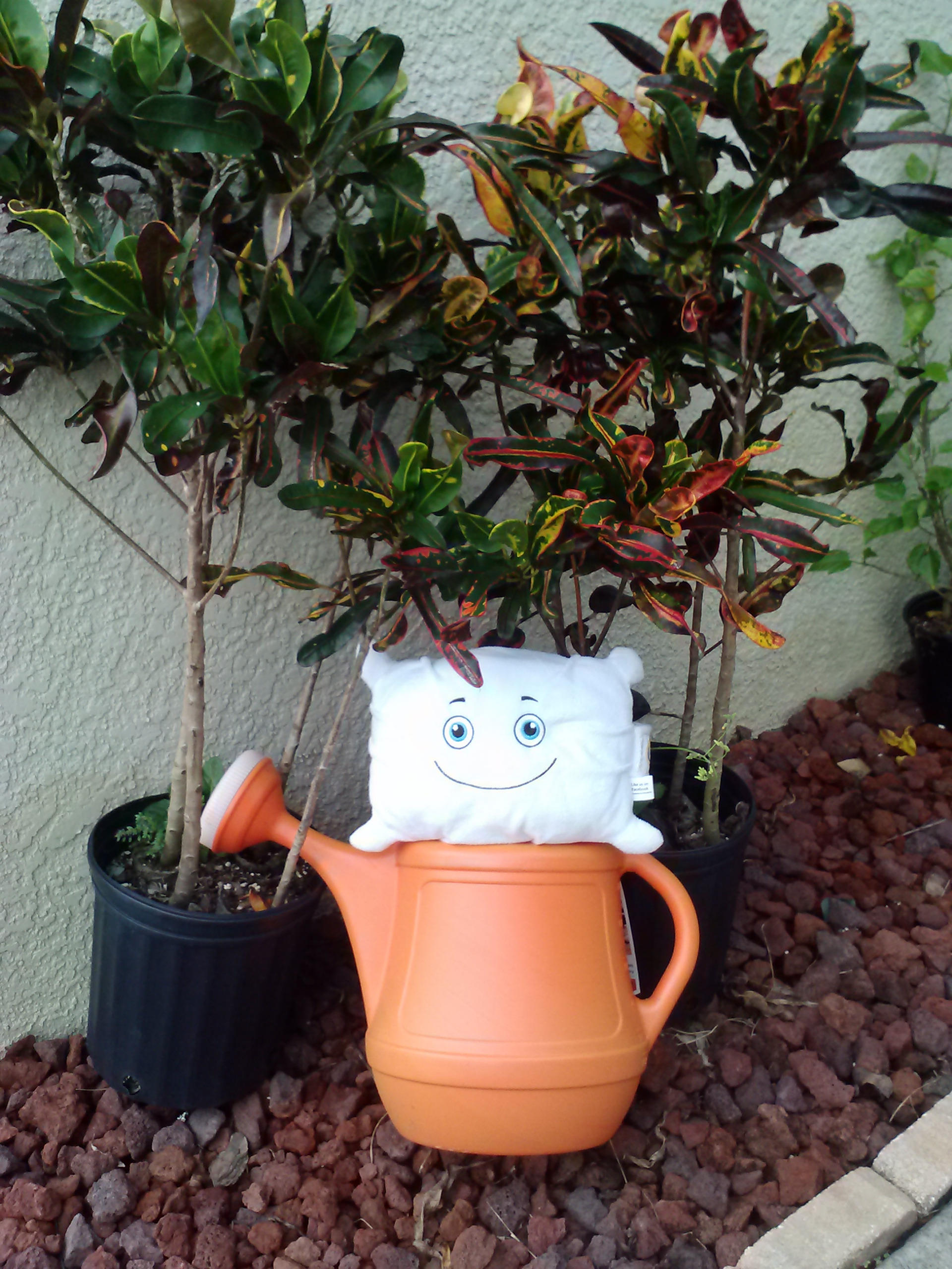 McStuffy doing his chore for the day - watering plants