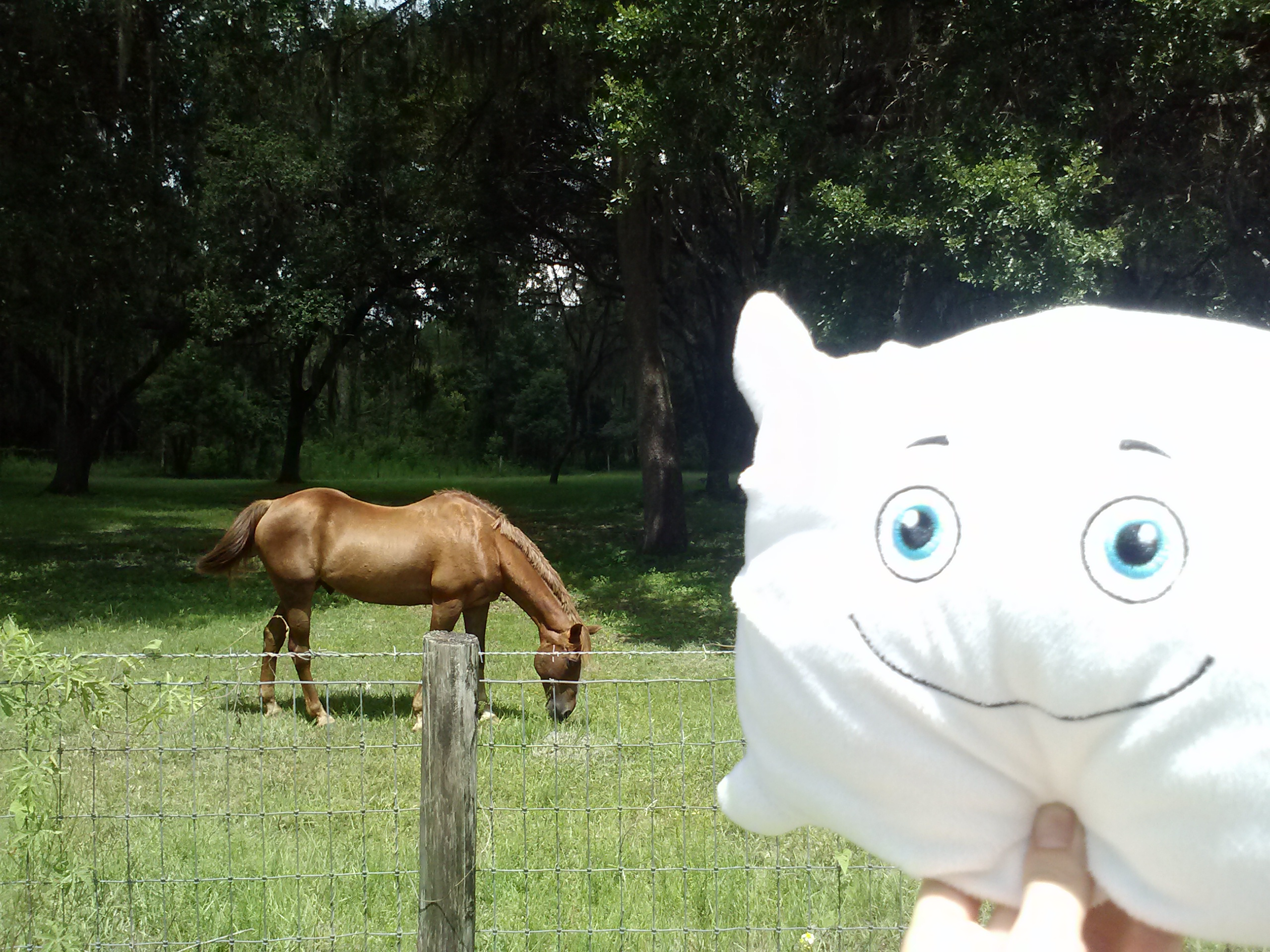 McStuffy is just horsing around
