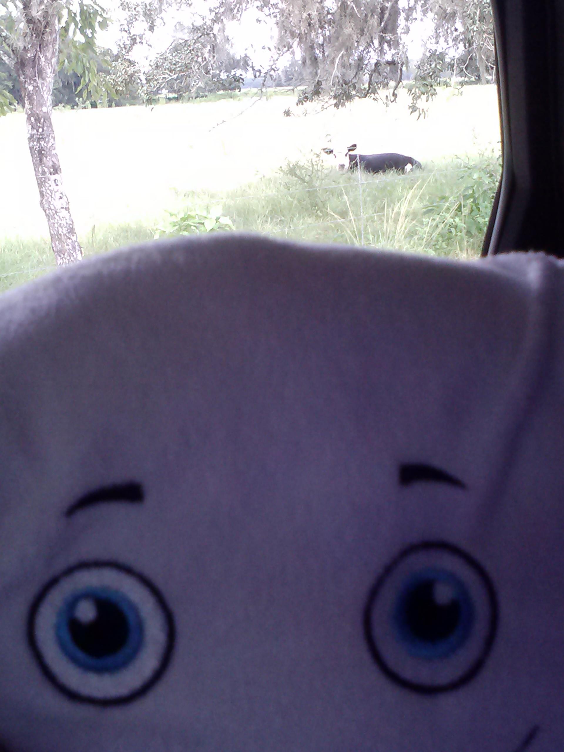 McStuffy loves cows