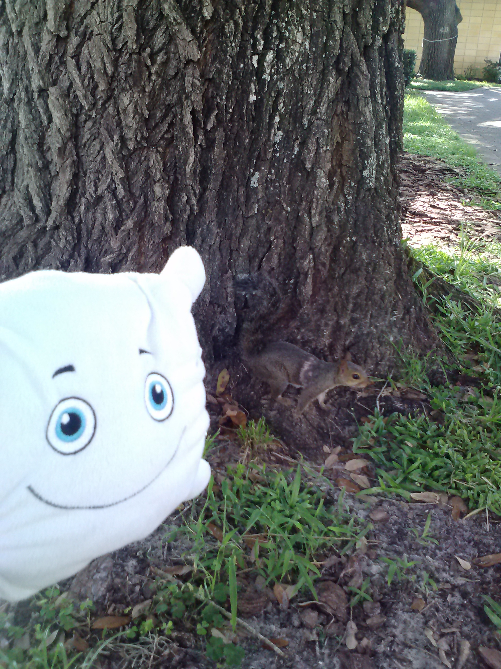 McStuffy feeds the squirrels! They love peanuts.