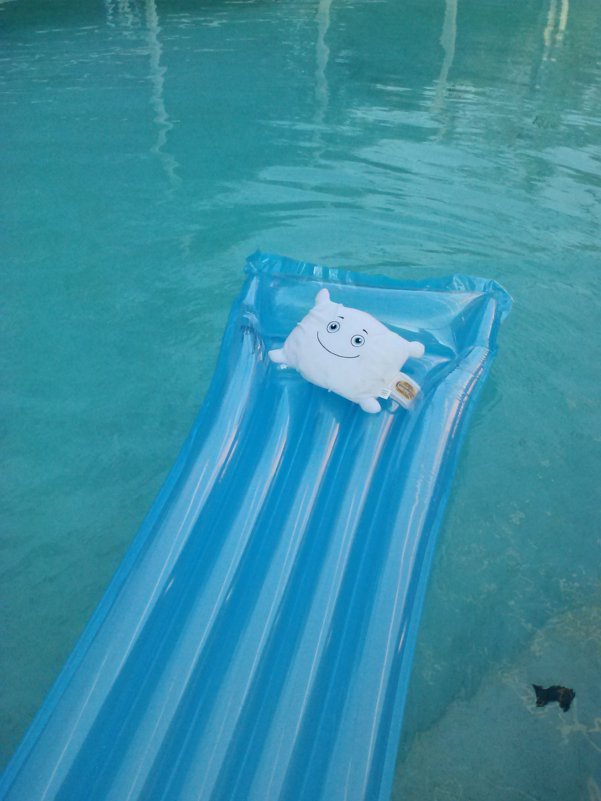 McStuffy is enjoying some time floating around the pool