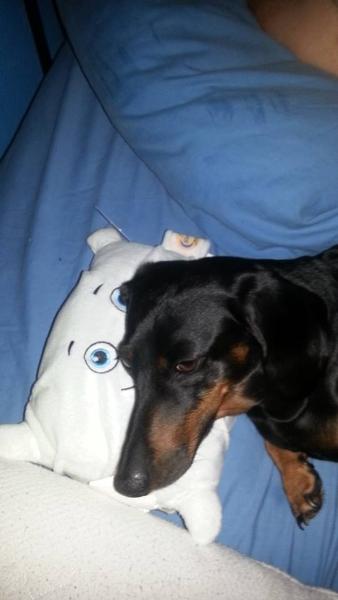 Jasmine and Pillow