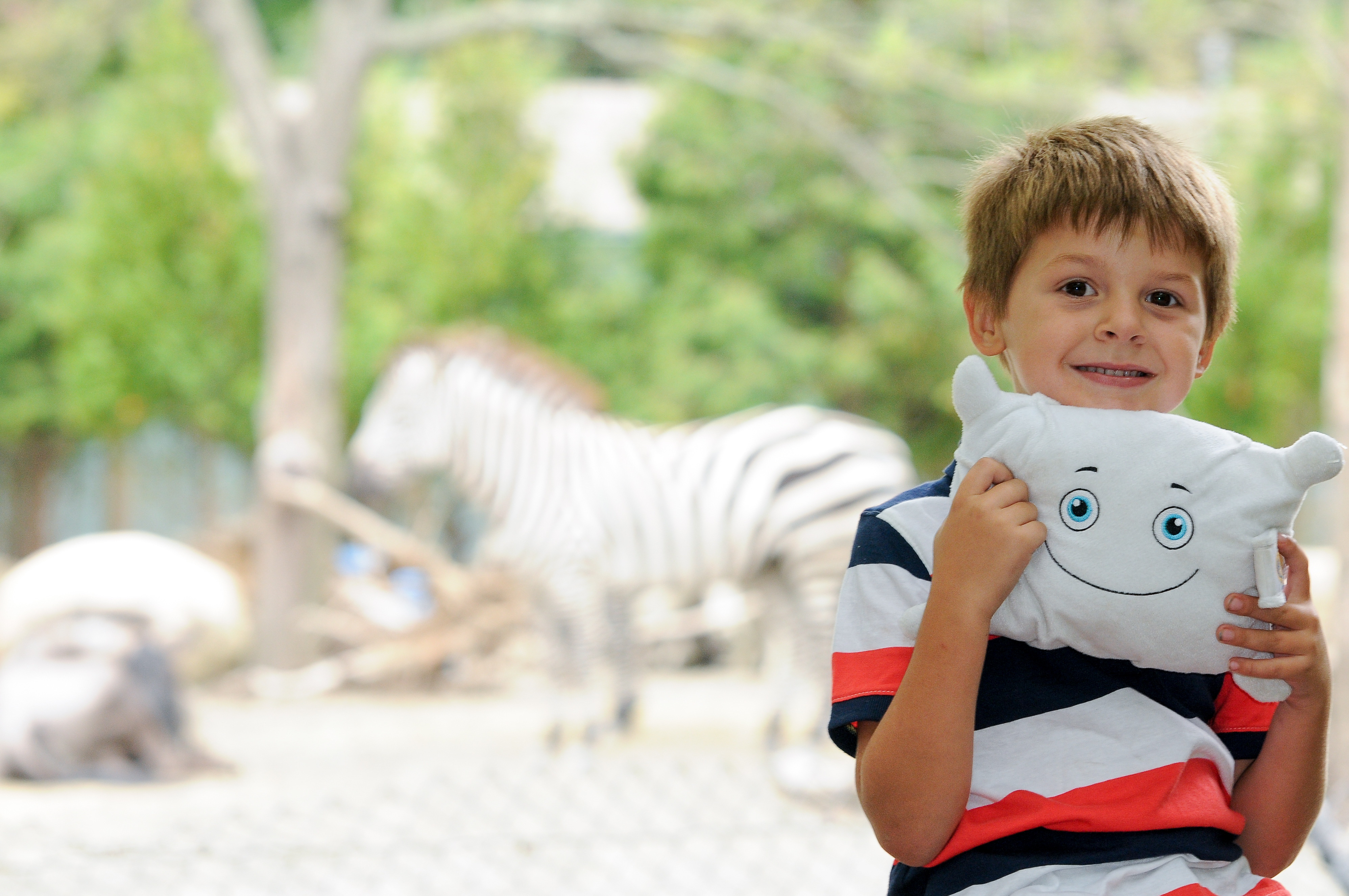 Pillow with the zebras at the zoo