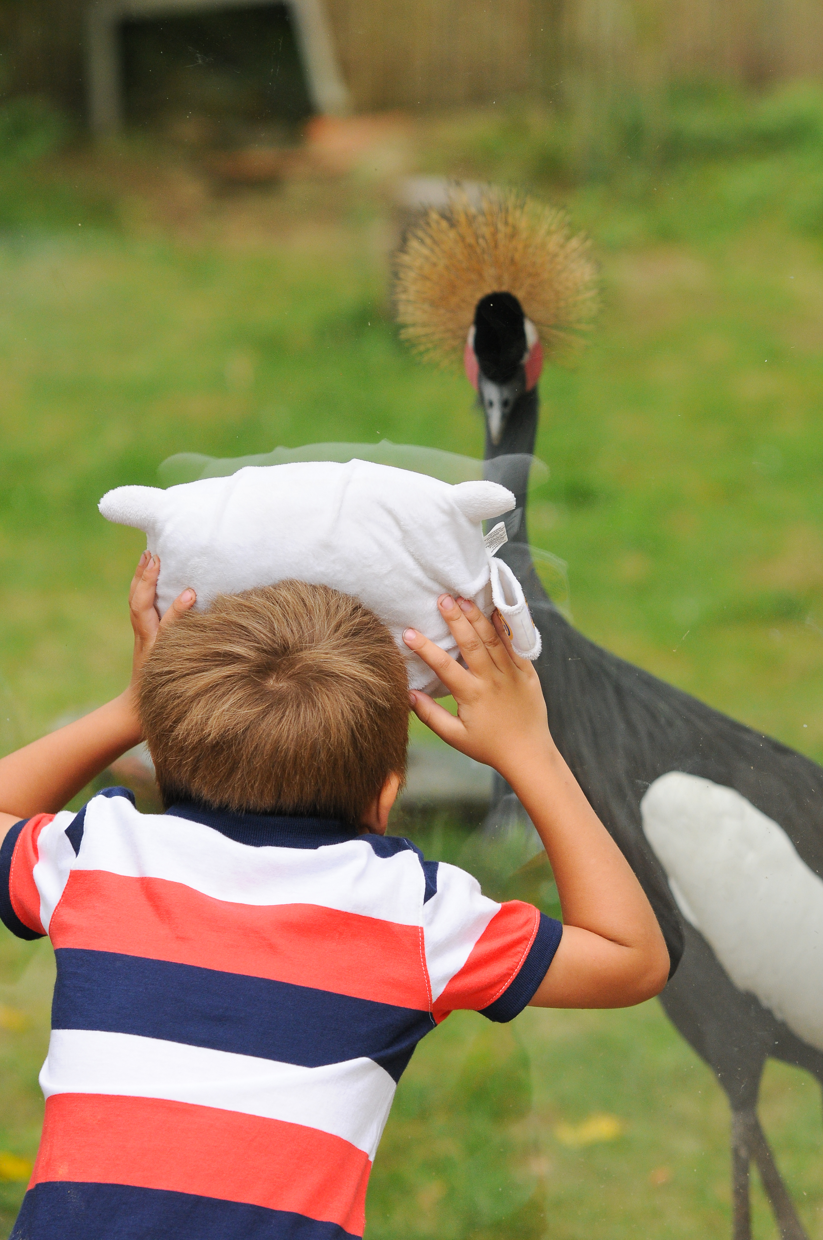 Caden showing Pillow Featherbed the African Crowned Crane