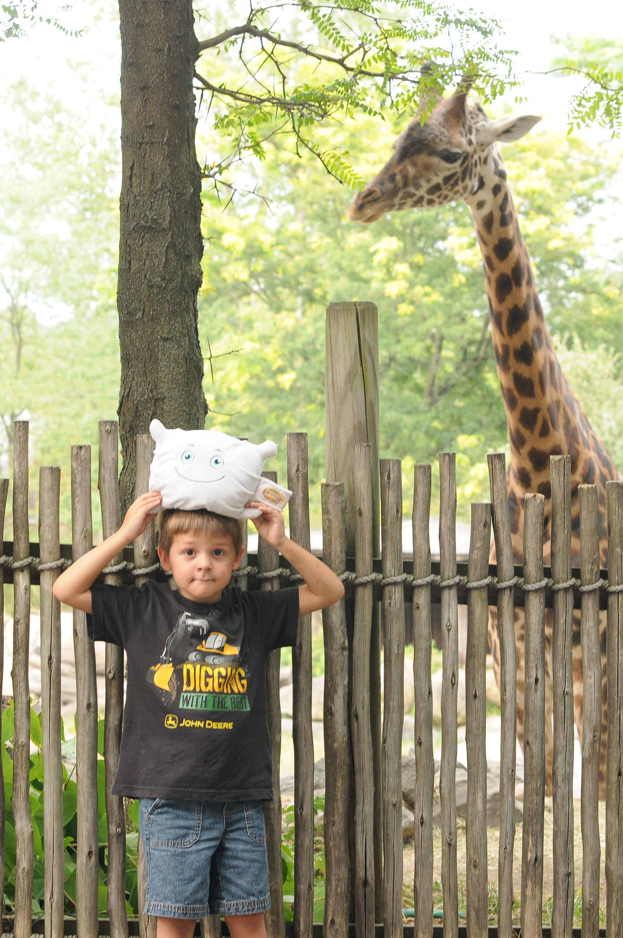 Pillow Featherbed tries to avoid being eaten by a giraffe
