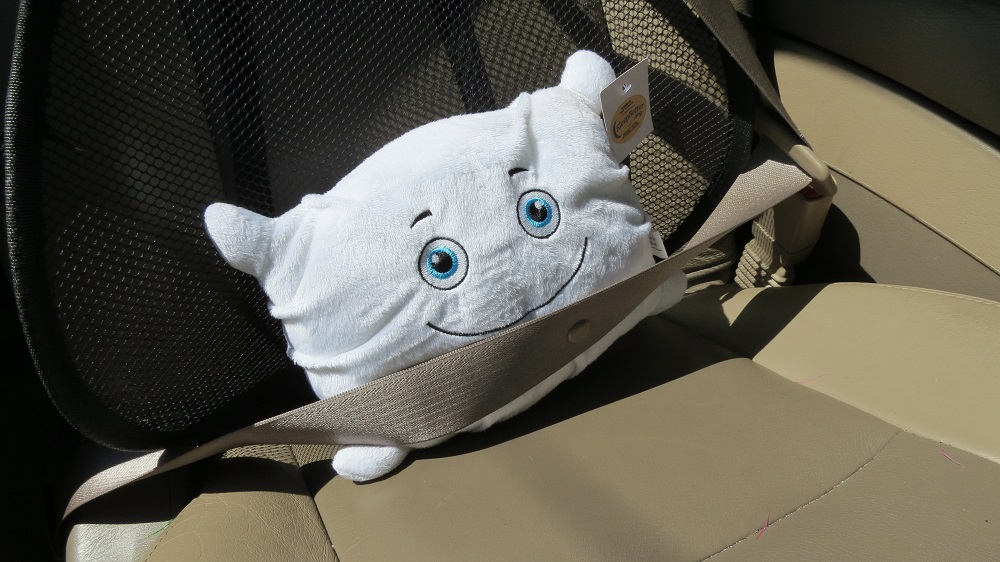 Phil is strapped in and ready for a ride in the car