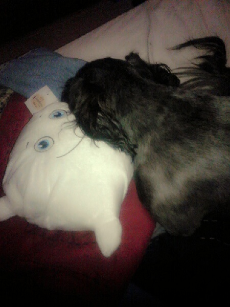 Zayn Pillow naps with Bear the Puppy
