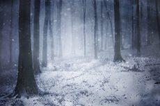Blizzard in a dark forest with fog in winter